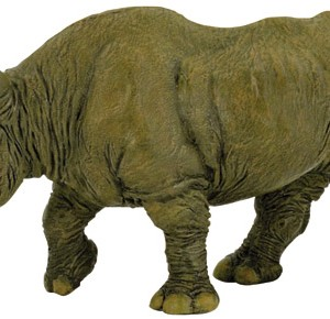 Rinoceronte negro-0